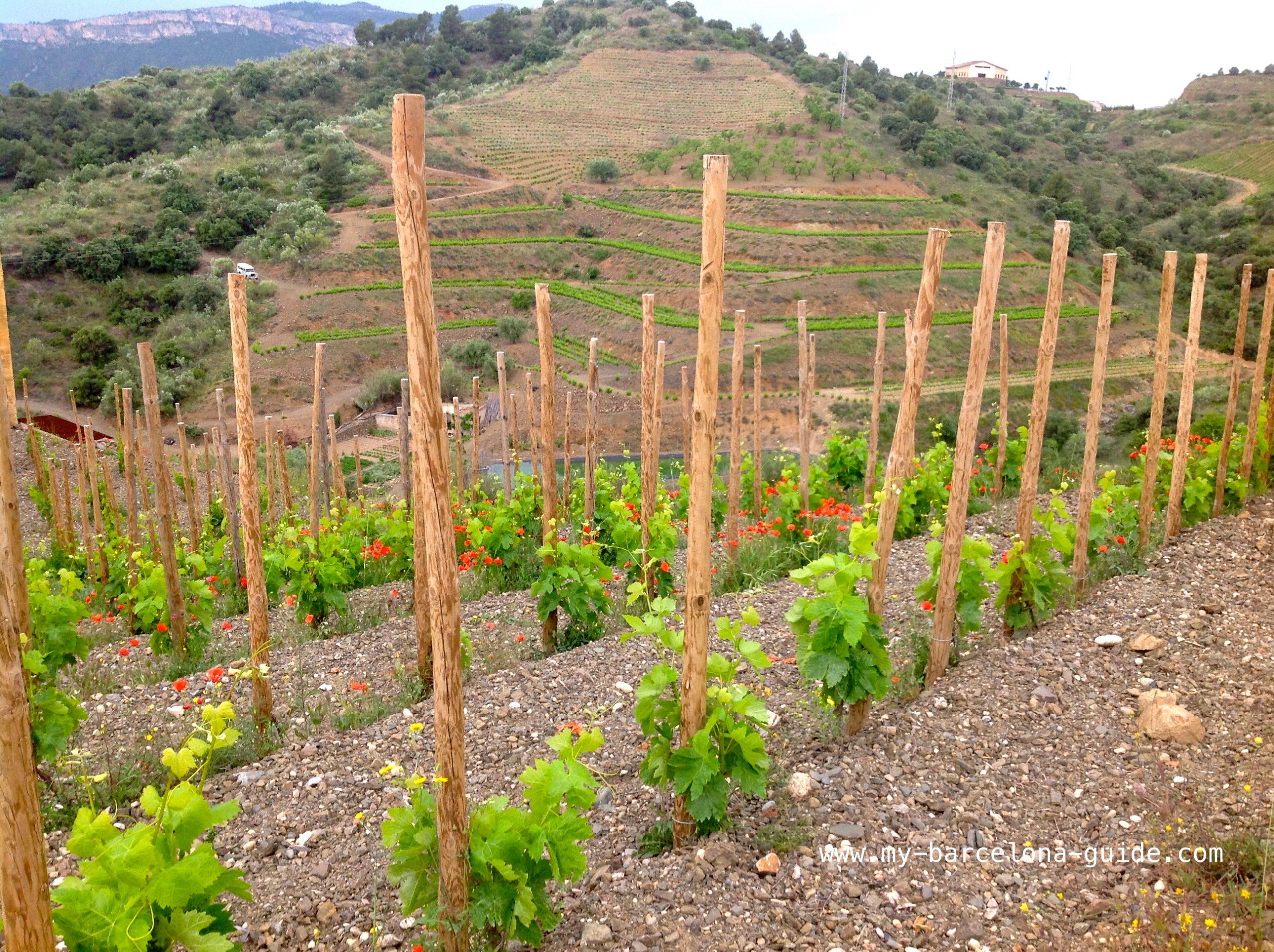 Виноградники Приората
